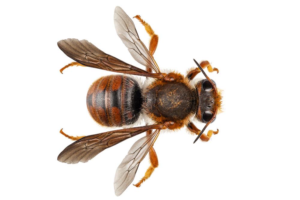 Mortar Bee