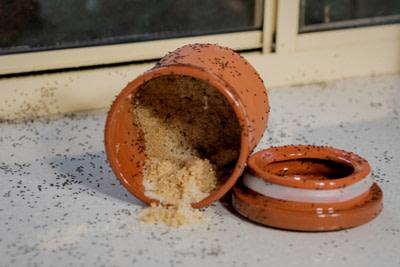 Ants in sugar bowl