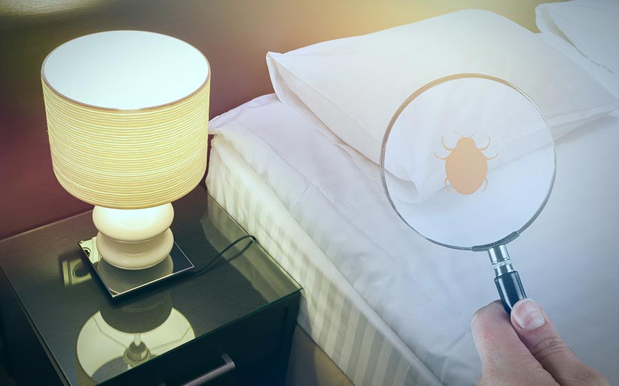 How To Deal With Bedbugs When You Travel